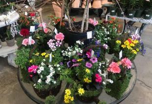 Pedras Decorativas Sanferflora - Página inicial | Facebook